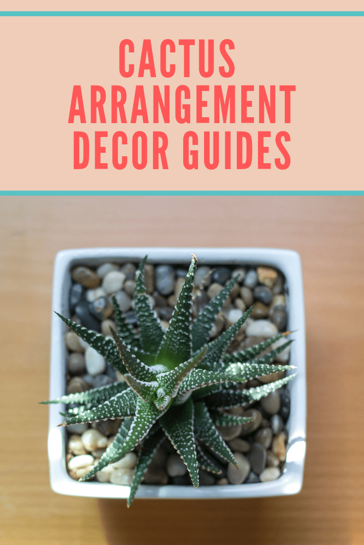 Cactus arrangement decor guides