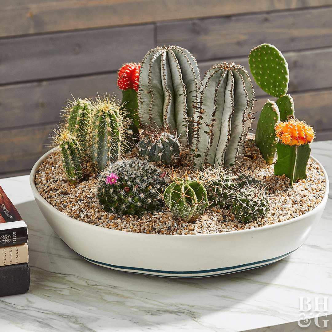 Cactus platter small home decoration ideas