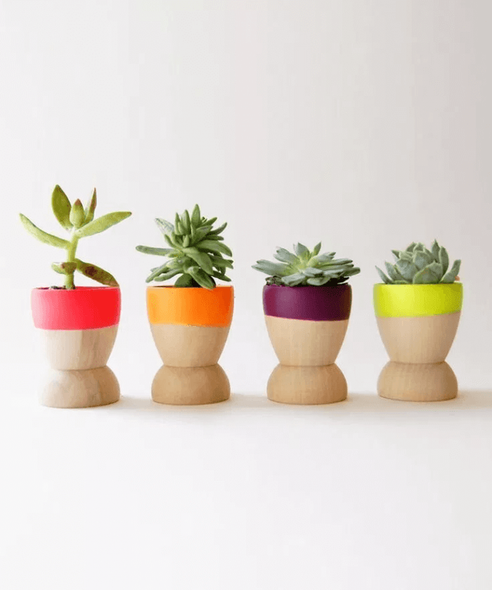 Cactus pot ideas decoration