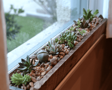 Wood cactus pot near window for small home decoration